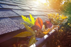 Colorful Fall Leaves in Gutter